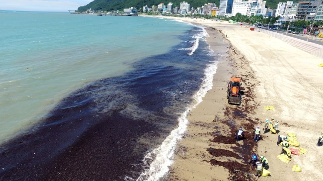 Environment workers remove massive clumps of seaweed that washed ashore on a beach in Busan on Wednesday, in the wake of Typhoon Prapiroon which passed by near the area over the past few days. (Yonhap)