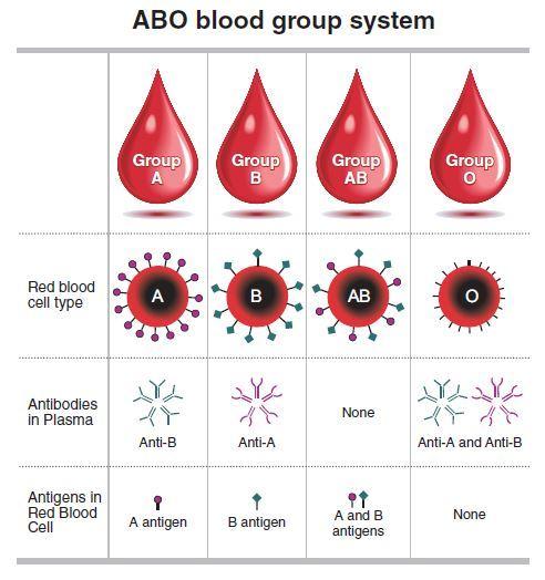 korean blood type personality test