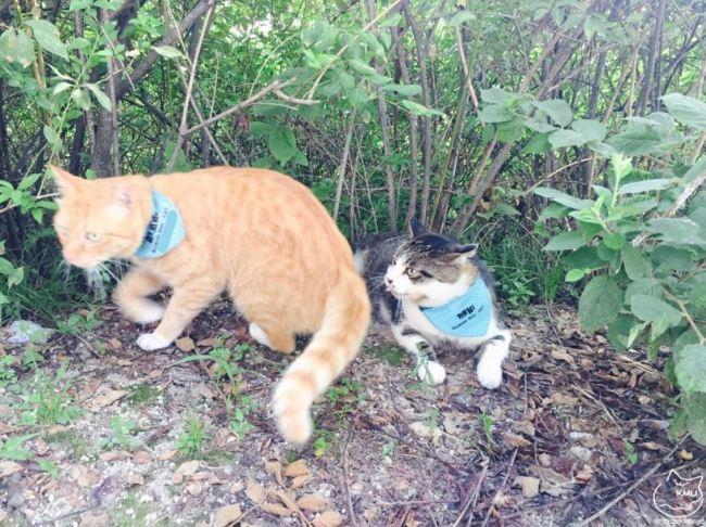 Cats protected by KMU-Cat wears blue bibs (KMU-Cat)
