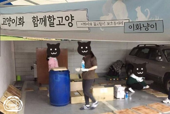 Ewha Cats members making the feed stops for the cats (Ewha Cats)