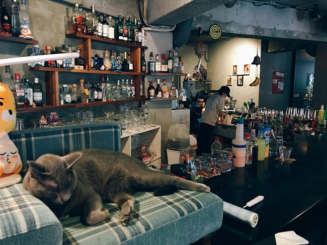 "A Russian Blue named Dream sleeps on a cat couch. He was adopted in 2014 after failing to sell at a nearby pet shop for being ""too big."" (Bar Bam Bar)"