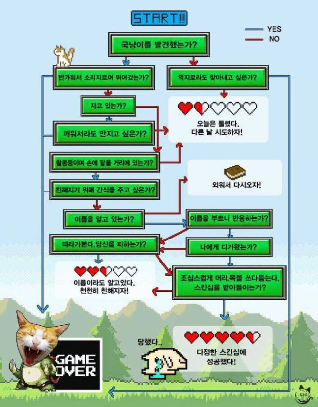KMU-Cat's poster made to inform students how to treat stray cats (KMU-Cat)