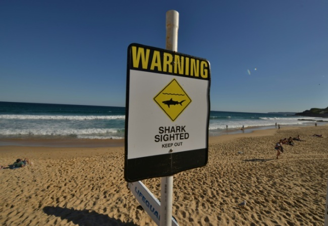 There have been six shark attacks in the last two months off Australia`s beaches (AFP)