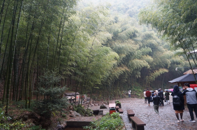 Bamboo Sea Scenic Spot (Im Eun-byel/The Korea Herald)