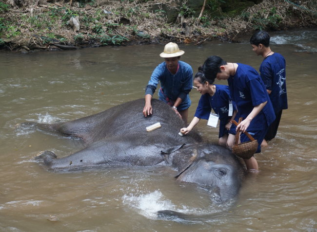 Students give a bath to an elephant at a local elephant sanctuary as part of a community-based tourism program in Thailand last year. (AKC)