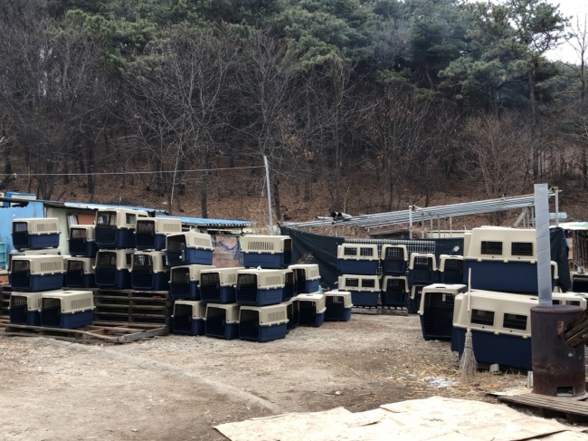 Humane Society International's cages are brought to an illegal dog farm in Korea. (Park Ju-young / The Korea Herald)