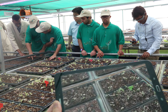 Disabled workers are educated on growing herbs at a smart farm in Khor Fakkan, UAE. (KT)