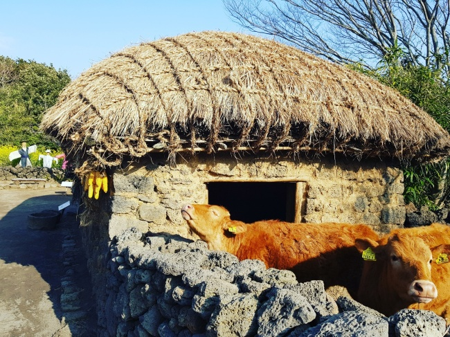 Jeju Folk Village (Seogwipo Tourism Council)