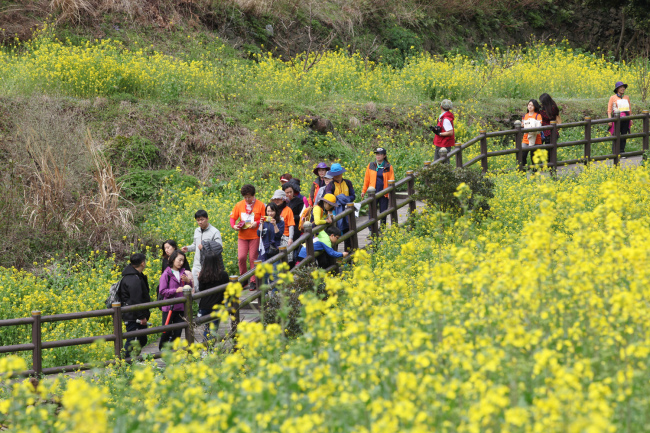 Yuchae (Canola) Flower International Walking Festival (Seogwipo Tourism Council)