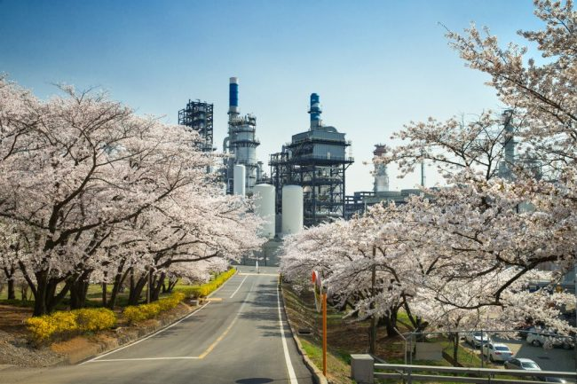 SK Incheon Petrochem opens the petrochemical complex at its headquarters to the public for six days every spring for a cherry blossom festival. (SK Incheon Petrochem)