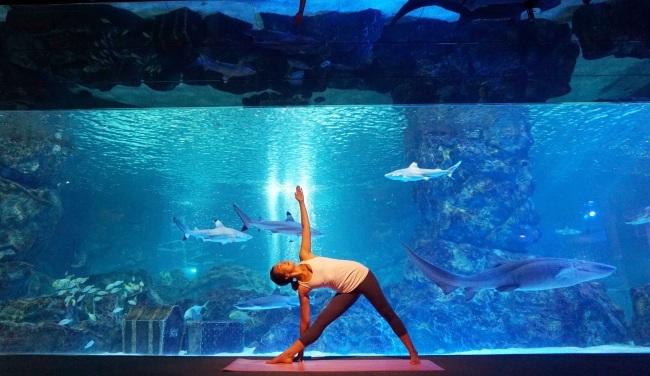 A Yoga instructor practices yoga at Coex Aquarium (Coex Aquarium)