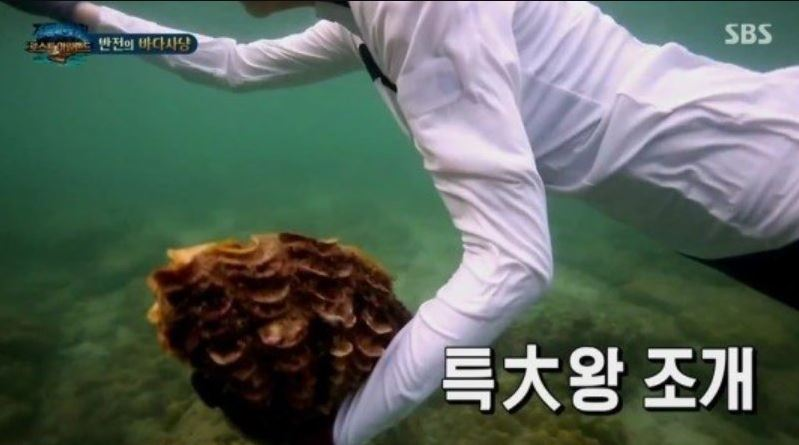 Captured image of the SBS show Laws of the Jungle.