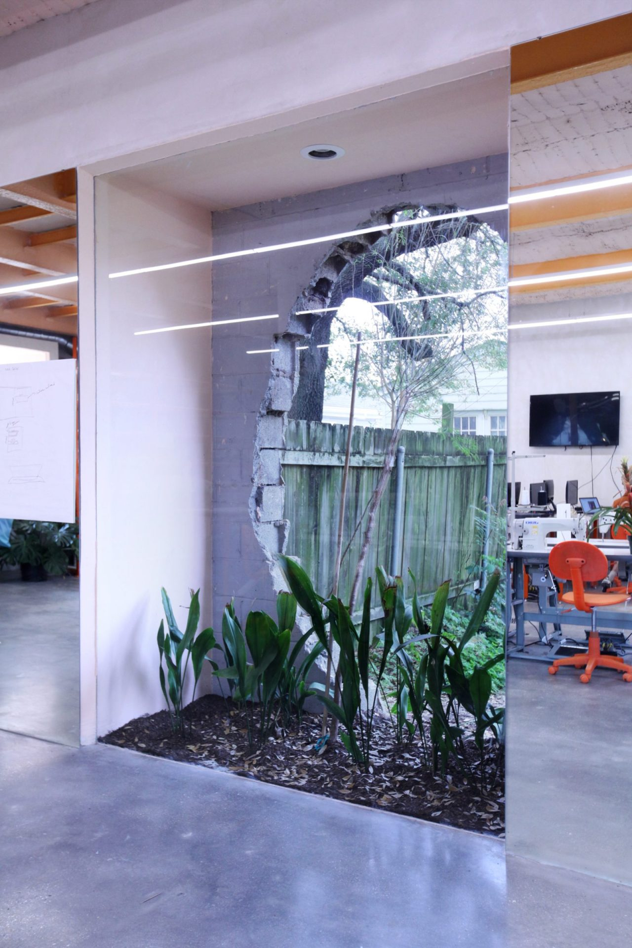 A garden sits between an inner glass pane and an outer window built to look as if it was punched in, at the Material Institute in New Orleans. (Kelly Colley)