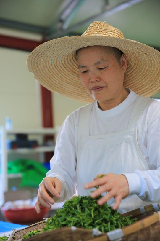Ven. Myoudeok preparing freshly harvested tea leaves for roasting. (Photo provided by Ven. Myoudeok)