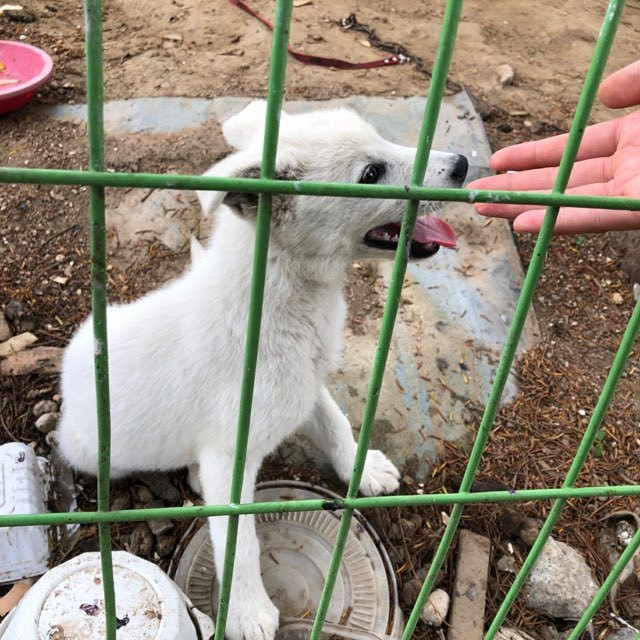 Brandnew before he was rescued (Save Korean Dogs)
