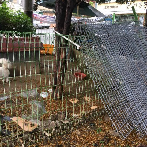 The cage where the dog meat dealer kept Brandnew (Save Korean Dogs)