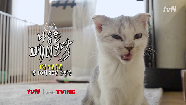 "tvN variety show ""The Meow is Fake"" (tvN)"