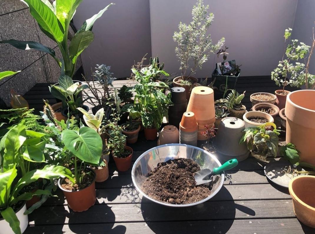 "Lim Elang cares for more than 100 ""companion plants"" at home. (Courtesy of Lim Elang)"