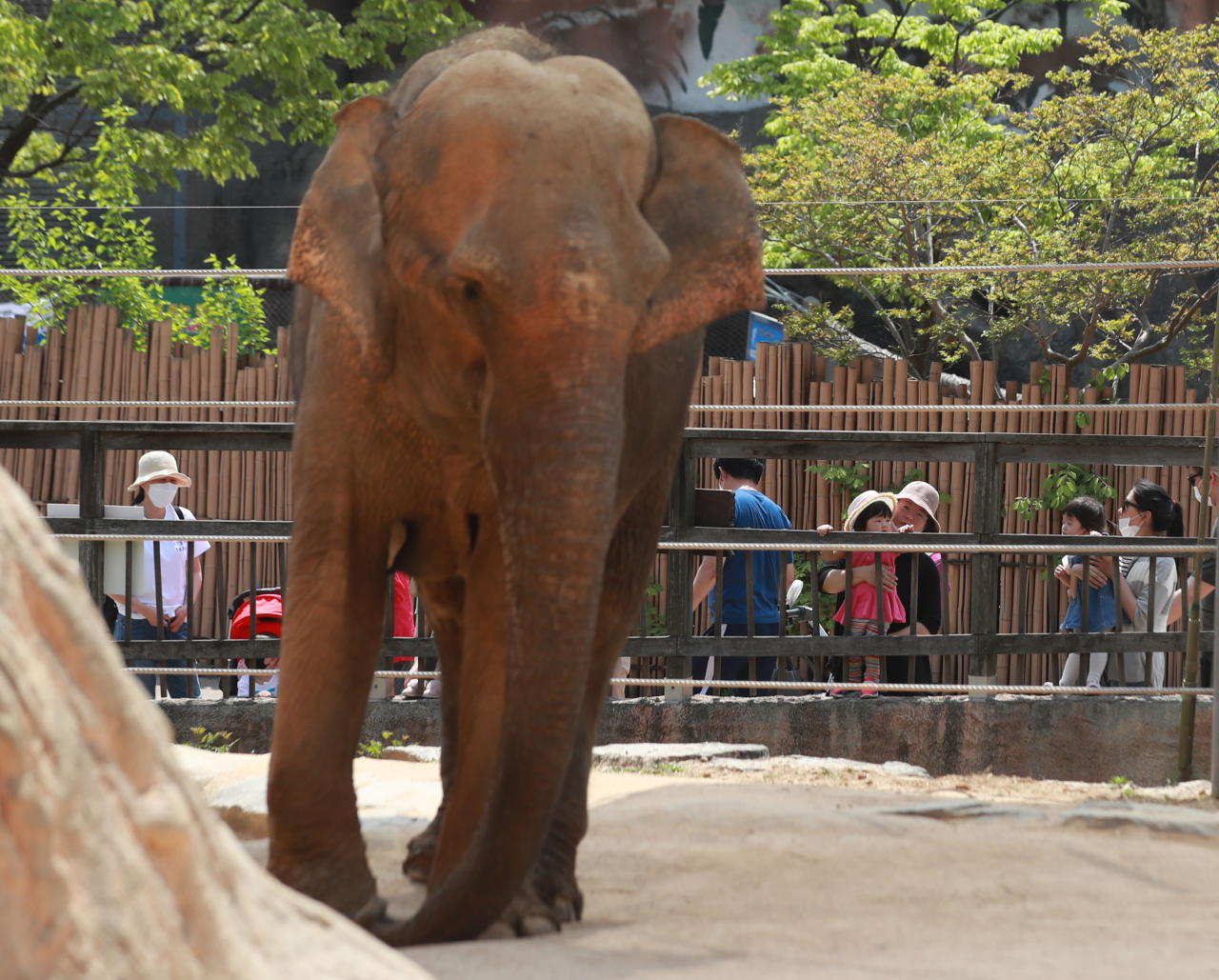 Families with children view an elephant in Children's Grand Park in Seoul on Monday. (Yonhap)