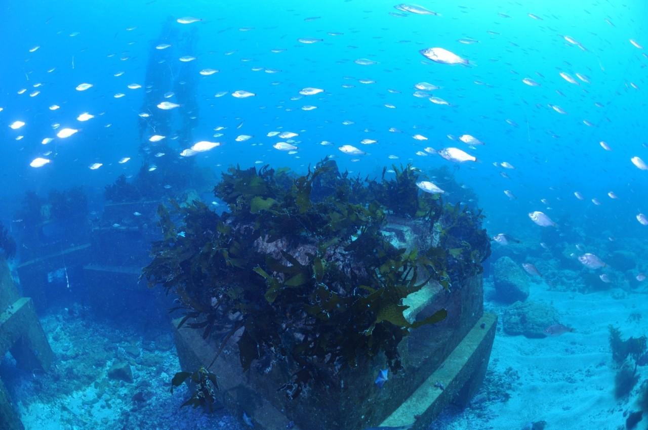 Posco's Triton formed with seaweeds and fishery (Posco)