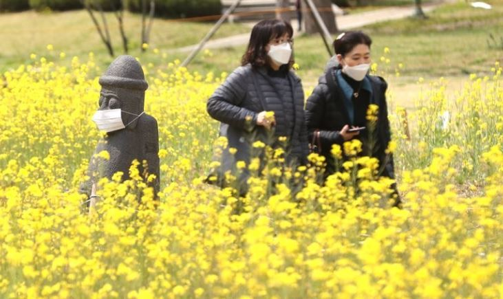 "A ""dol hareubang,"" Jeju Island's signature rock statue, is seen in a field of canola flowers at Children's Grand Park in Seoul in April. The novel coronavirus has dealt a severe blow to Jeju residents in terms of job security. (Yonhap)"