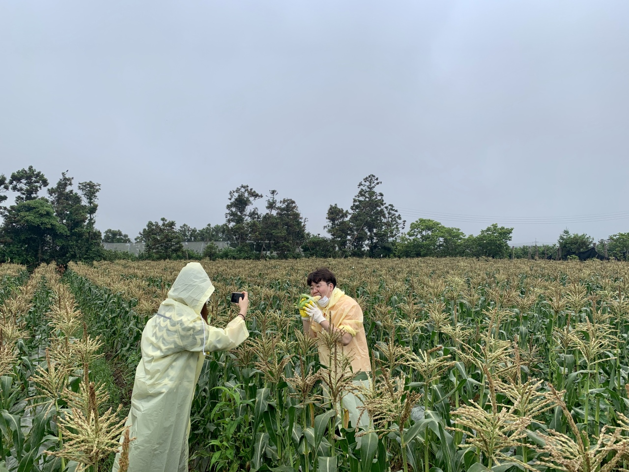 A tourist picks corn at the Mulme Healing Farm. (Im Eun-byel/The Korea Herald)