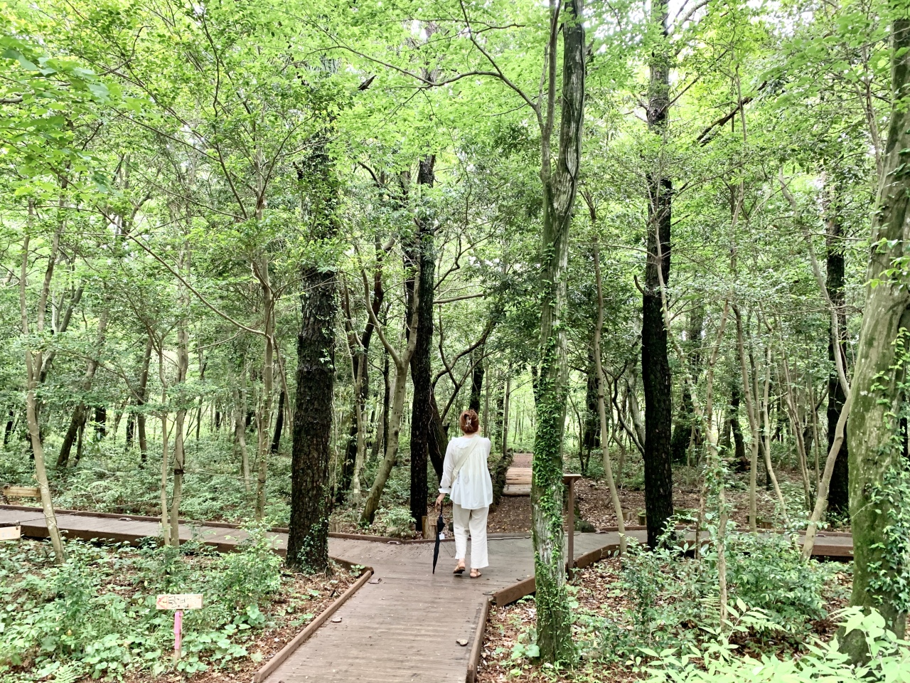 A tourist walks along a path in the Seogwipo Forest of Healing. (Im Eun-byel/The Korea Herald)