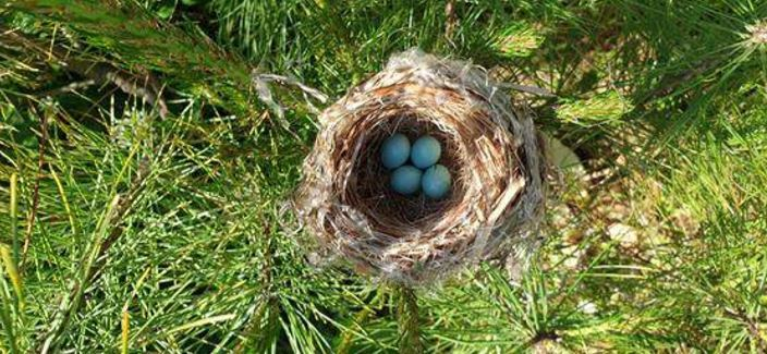 A photo of a bird's nest near the royal tombs in Namyangju, Gyeonggi Province. (CHA)
