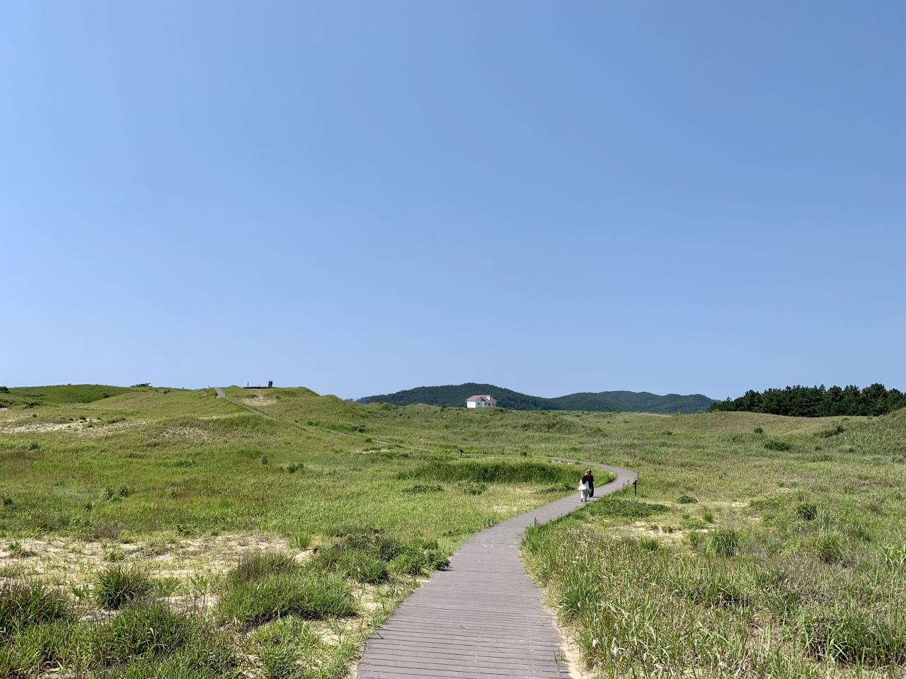 Sinduri Coastal Dune (Im Eun-byel / The Korea Herald)