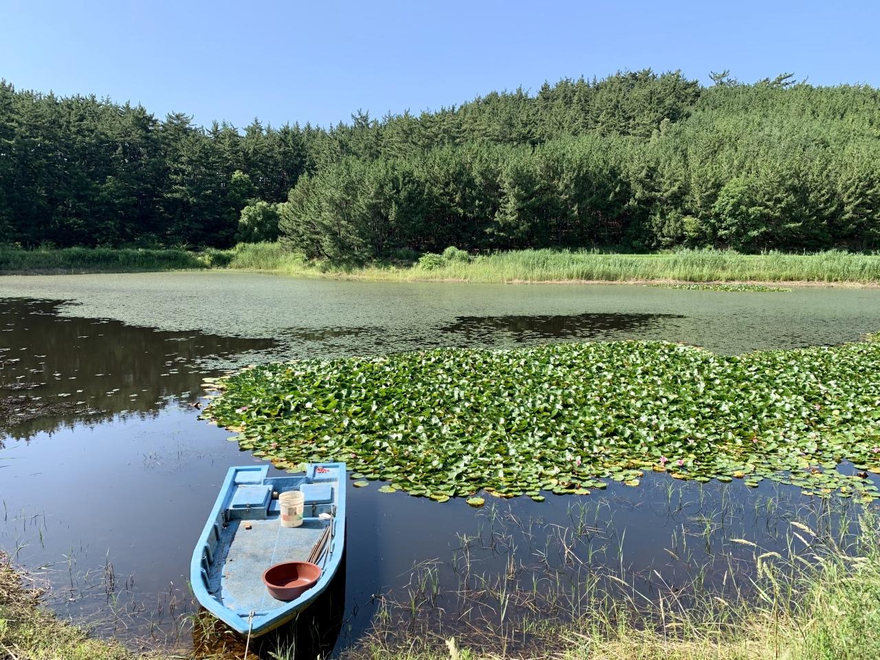 Duwung Wetland (Im Eun-byel / The Korea Herald)