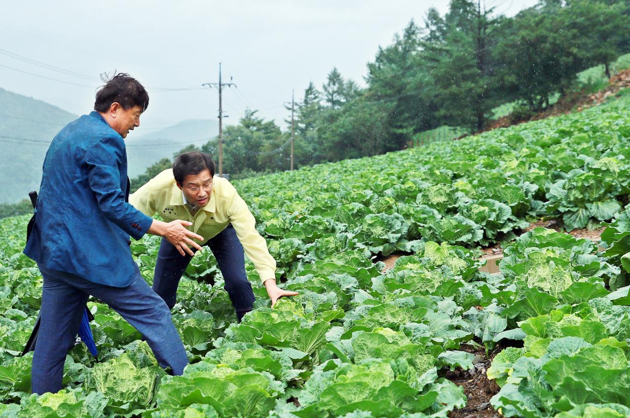 Taebaek Mayor Ryu Tae-ho (right) checks on napa cabbages in Taebaek, Gangwon Province on Thursday. (Yonhap)