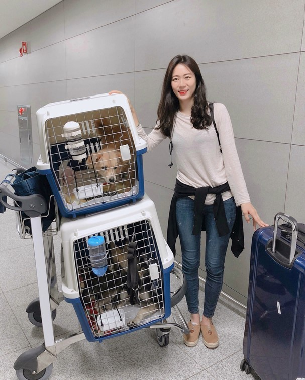 Kim Ji-won flies to New York with two shelter dogs last year. (courtesy of Kim Ji-won)