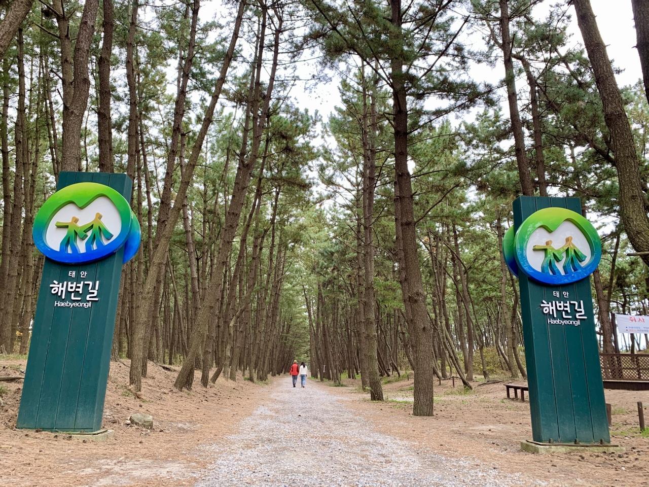 Pine tree road near Sambong Beach (Im Eun-byel / The Korea Herald)