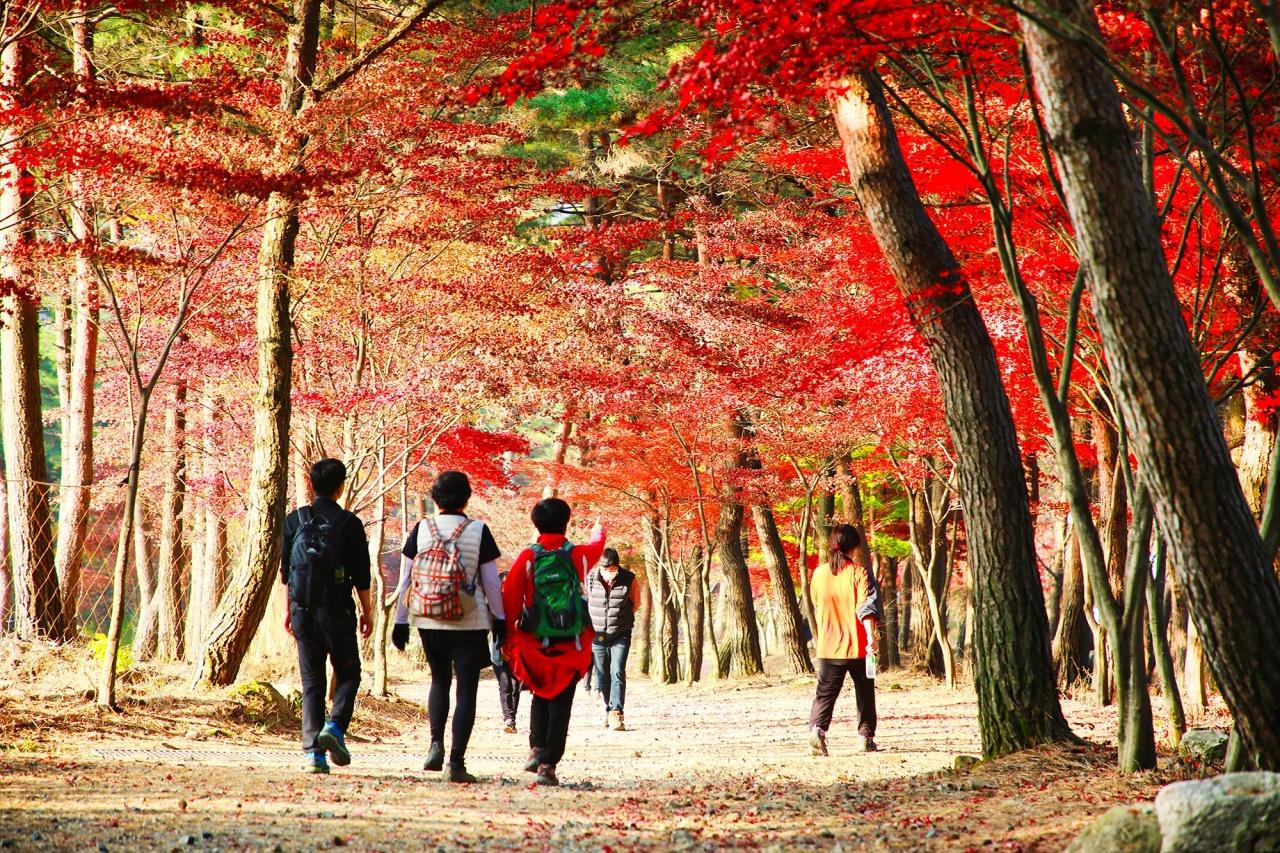 People hike on Palbongsan in Gangwon Province in November. (Yonhap)