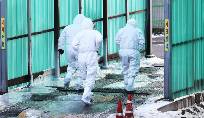 Quarantine officials prepare to cull chickens at a farm in the central city of Sejong on Jan. 6, 2021, as an avian influenza case was found there. (Yonhap)
