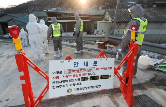 Quarantine officials move to facilities after an avian influenza was confirmed at a poultry farm. (Yonhap)