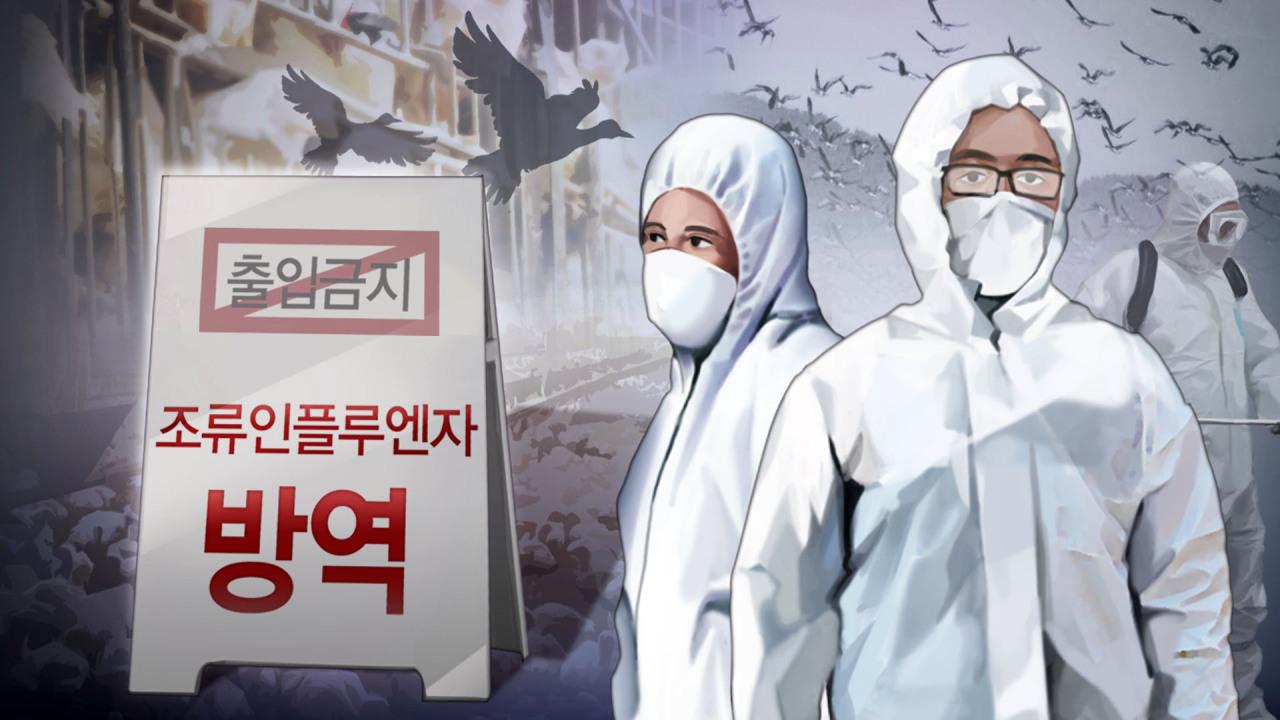 Avian Influenza (Yonhap)