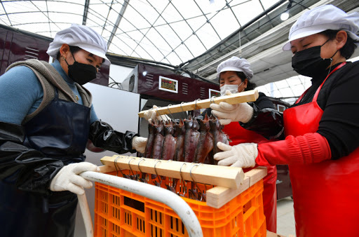 Residents of Hwacheon produce semi-dried sancheoneo, a species of trout, last Friday, in this photo provided by the Hwacheon county office. (Hwacheon Country Office)