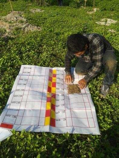 Soil analysis of ex-mine forest restoration site in Bidor, Malaysia (AFoCO)