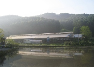 Youngjun Farm, established in 1996, moved to its current location in Naesan-ri, North Chungcheong Province in 2002. (Youngjun Farm)