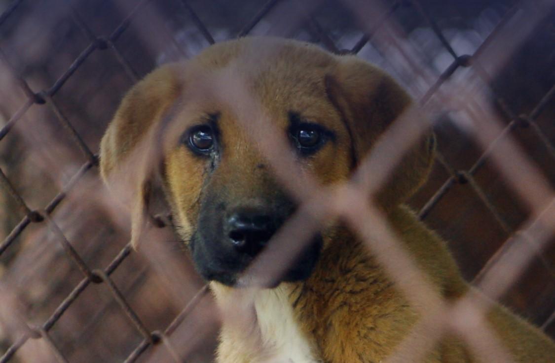 Korean Animal Welfare Association