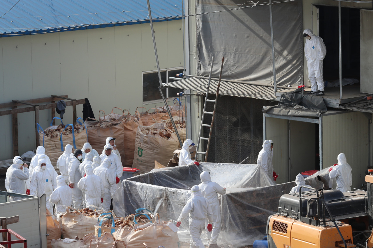 Officials prepare to cull poultry at a farm in Paju, north of Seoul in January (Yonhap)