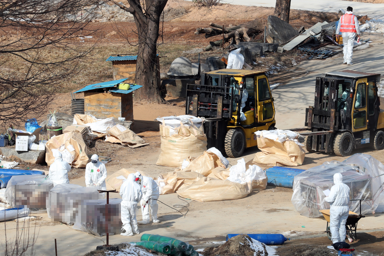 Officials cull chickens at a farm in Hwaseong, south of Seoul, last Friday. (Yonhap)