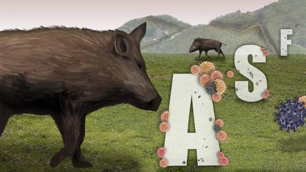 African swine fever (Yonhap)