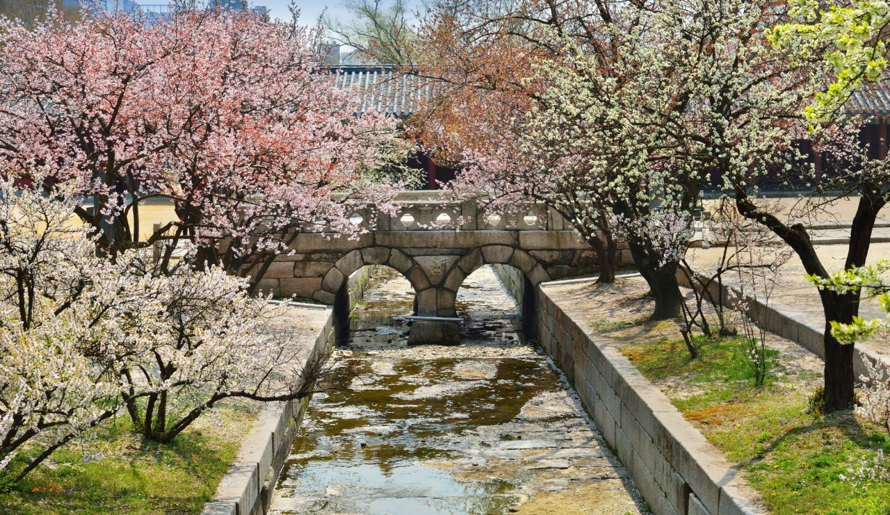 Flowers at Changgyeonggung in Seoul (Cultural Heritage Administration)