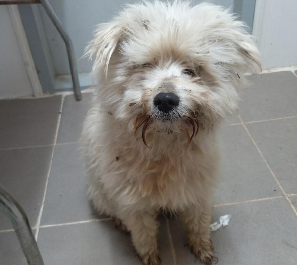 A photo of a white Maltese mix waiting for euthanasia uploaded on online animal adoption platform, Pawinhand (Animal shelter in Jangseong-gun)