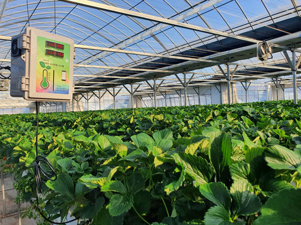 An experimental testbed for a smart farm built at the Pocheon municipal government's Agricultural Technology Center in Gyeonggi Province. (Pocheon municipal government)