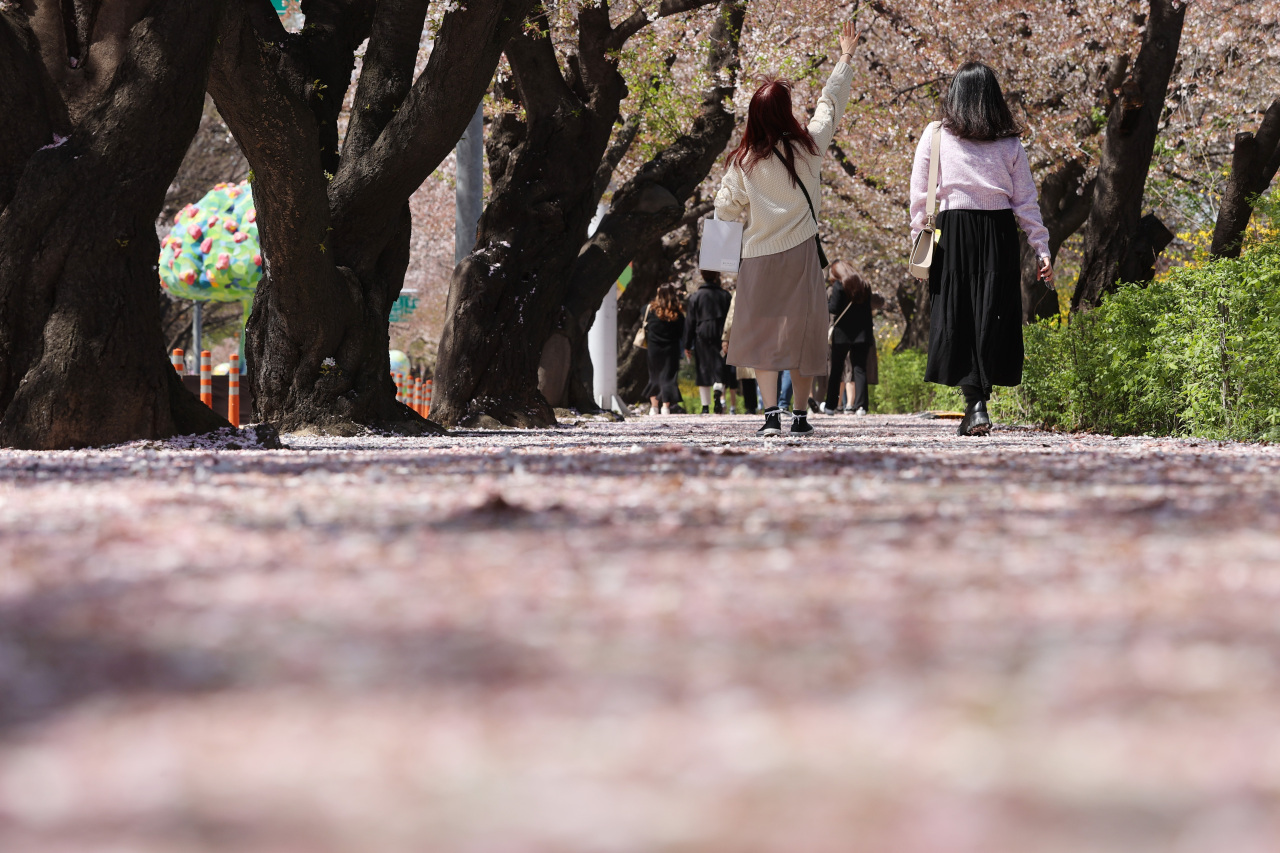 Two women walk under cherry blossoms in Yeouido, Seoul, on Monday. (Yonhap)