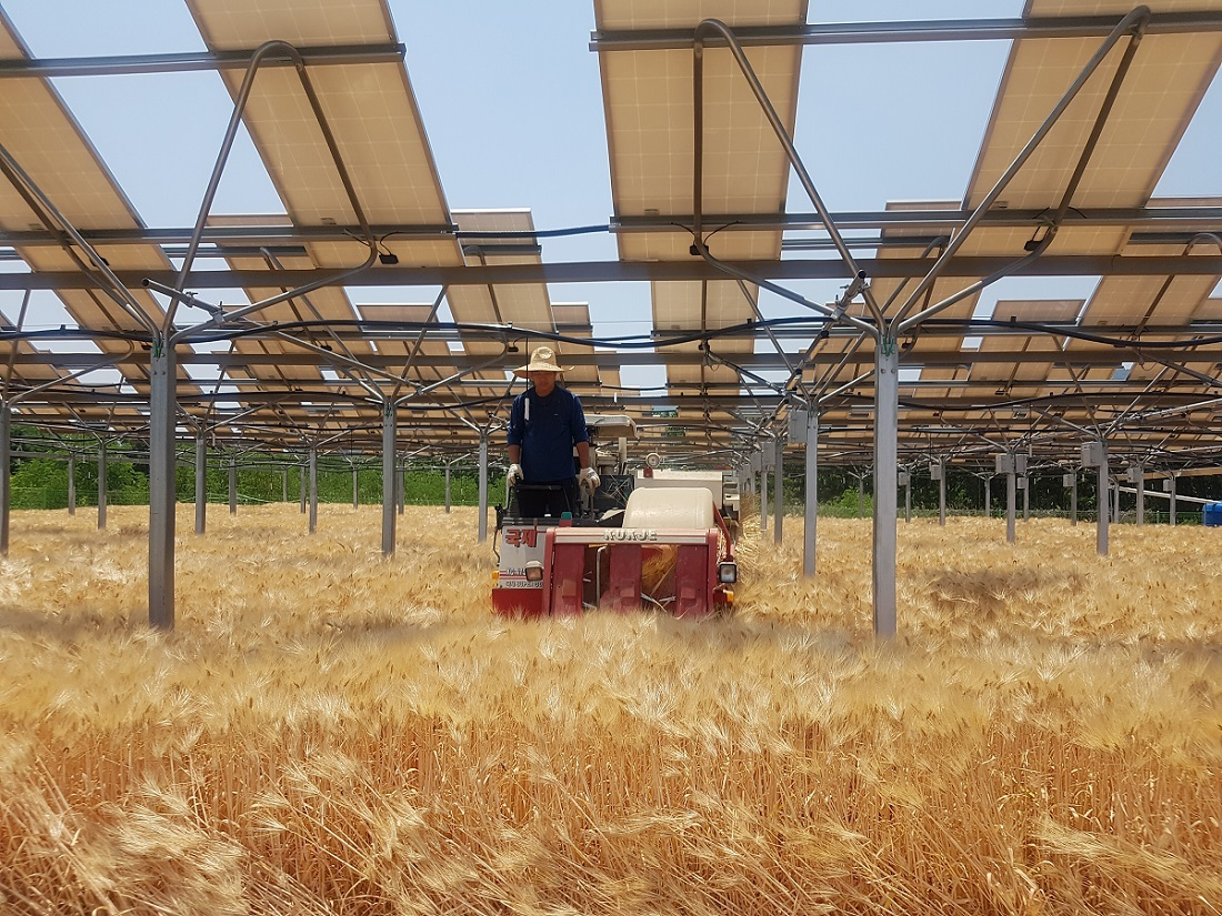 A farm installed with solar panels above crops. (Hanwha Q Cells)