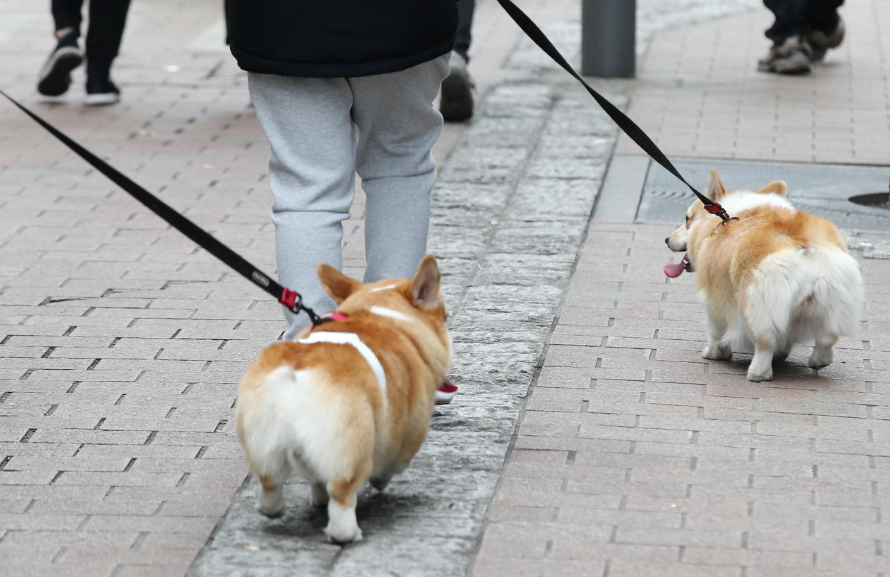 This file photo shows pet dogs on a walk in Myeongdong, downtown Seoul, on Jan. 31, 2021. (Yonhap)